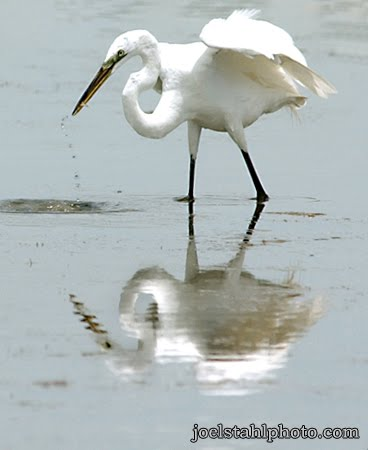 Reflection On Water Birds White Heron